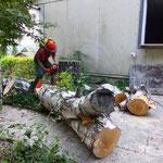 Wie eine Baumarktwerbung