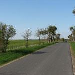 alte Straßenbäume und neue Windräder