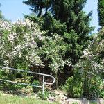 Blütenpracht an der Hütte