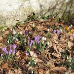 Frühlingsgruß im März 2012