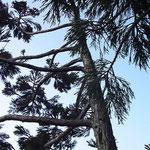 Impressionen aus dem Baum