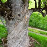 So schön kann ein Baumstamm sein