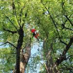 Baumpflege / Seilarbeit