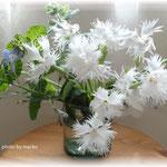 庭の涼しげな花をスペイングラスに入れて