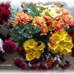 thanks 畑のお花