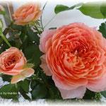 利休草・ポリシャス・セダムと薔薇