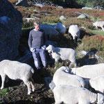 Hannes bei der Hirtekontrolle - Ochsenbörtli - Herbst