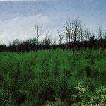 5. Entwaldete Flächen östlich und westlich der Gräfenhäuser Str. und südlich des Merck'schen Wasserwerkes