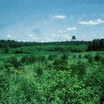 4. Entwaldete Flächen östlich und westlich der Gräfenhäuser Str. und südlich des Merck'schen Wasserwerkes