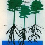 Wald mit Grundwasseranschluß