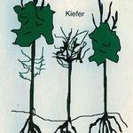 Wald, dem der Grundwasseranschluß entzogen wurde