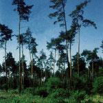 3. Entwaldete Fläche südlich des Storkebrünnchens