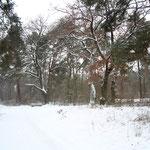 Mächtige alte Bäume am Zugang Hilpertstraße