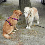 Barkley & Hailey