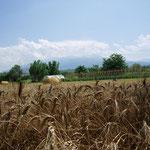 vom Pescaratal aus Richtung Maiella