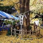 大宮八幡の銀杏はとっても有名