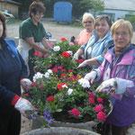 Fleißige Damen pflanzen die Blumen....