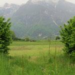 Der Regen tut der Natur gut - sattes Grün