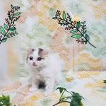 No.107の仔猫です。動画はブログからご覧頂けます。