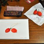 Sさん作、烏瓜の色鉛筆画