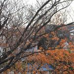 六浦教室からの眺め