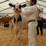 Kategorie 2, Mapleyard Holstein