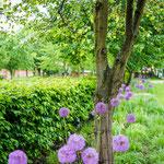 Garten Schloss Grube - Impressionen