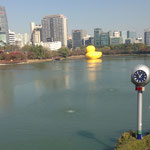 Rubber Duck in Seoul