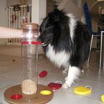 Am Schluss ein kleines Hundespiel!