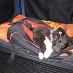 Tiefschlaf im Rucksack! Mein Transportmittel fuer die Herbstwanderung!