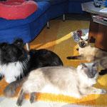Ein seltenes Bild!!!!! Alle drei zusammen, mit Sicherheitsabstand!