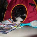 Das Katzenhaus und die Zeitung gehoeren jetzt mir!