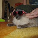 Shirkan will cool aussehen!