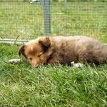 Qiero schläft auch schon lange!