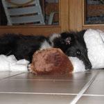 Das ist mein neuer Tchibo-Hund!!