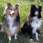 Links sitzt Princesse d'Or (Ponie), rechts sitzt Perle (Perl'Kyna)!