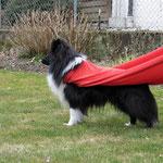 Super-Dog! Oder: Super-Star nach dem Jungelcamp...xD