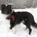 Eine schoene Pose im Schnee, damit alle gluecklich sind!
