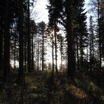 Nun streife ich durch den tiefen Wald...