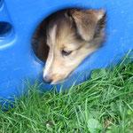 Princesse versucht sich zu verstecken!