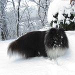 Anstrengend, in diesem Schnee zu laufen!