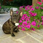 Betty das Mauerblümchen