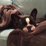 Baroness Franzi beim Mittagsschlaf