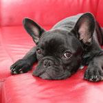 Black Cooper - die Couch gehört mir