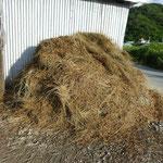切り落としたビーグは肥料となります。。
