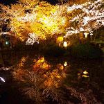 高台寺のように、池を使った視覚効果。