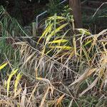 さて、わかります?左下がわかりやすいかな。片葉の葦。