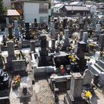 お中日(23日)の墓地は、華やかです。