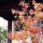 秋らしくなりました。