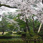 白っぽい桜が多かったような。